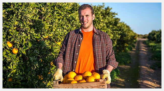 Two-way Radio Solutions For The Citrus Growing Industry
